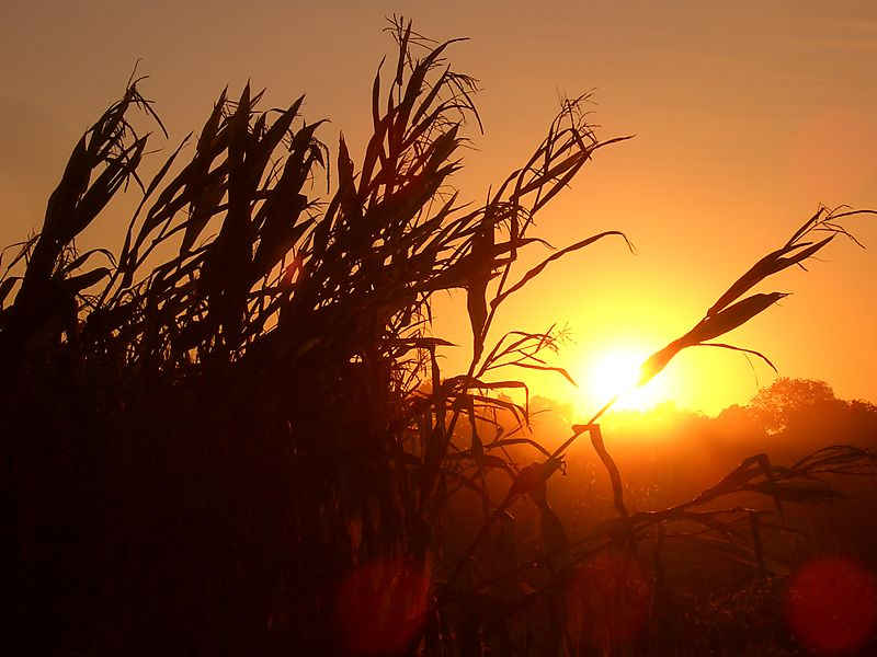 AT-farm-sunrise.jpg